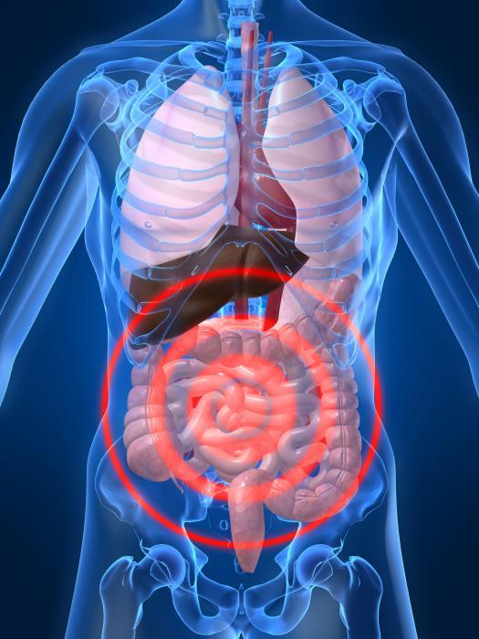 Elimination digestive