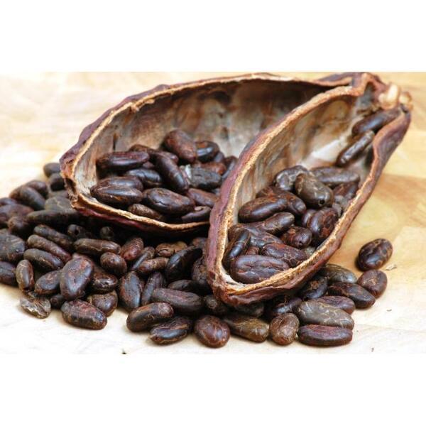 Fèves de cacao avec sa cabosse