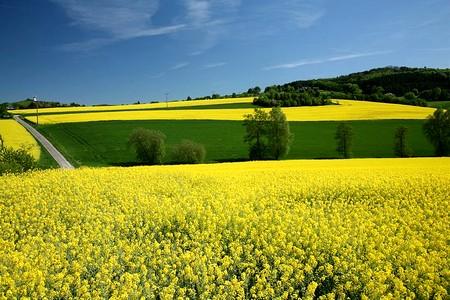 colza bio biocarburant