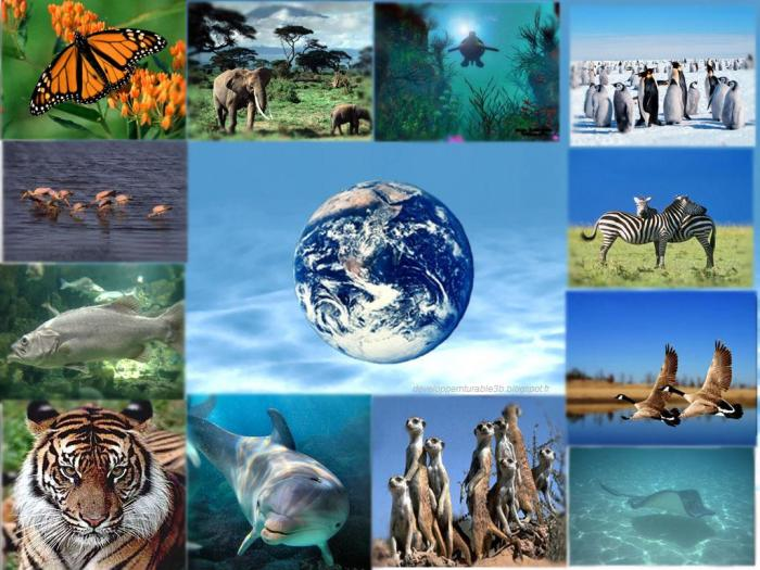 BIODIVERSITE EN DANGER - ESPECES ANIMALES ET VEGETALES MENACEES