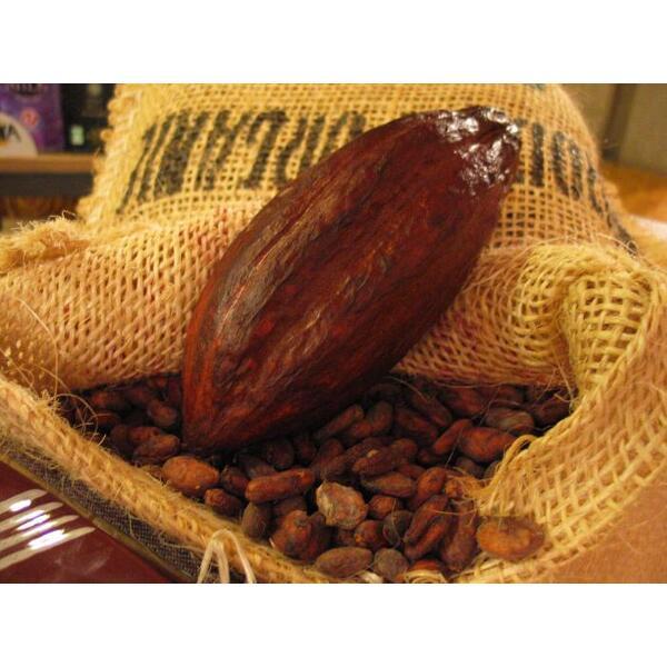 La cabosse et ses fèves de cacao