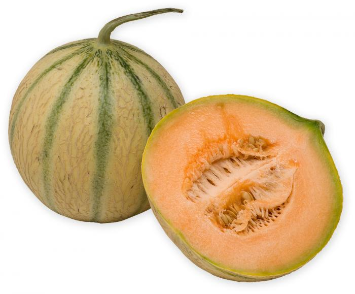 Melon bio - Cucumis melo - Plante herbacée annuelle - Cucurbitacée