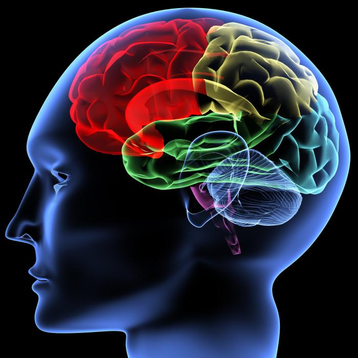Maladie d'Alzheimer - Maladie neurodégénérative