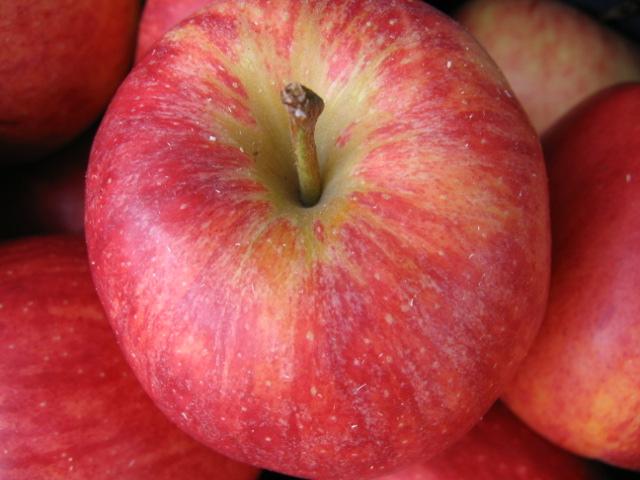 Les Polysaccharides et les fibres de la pomme