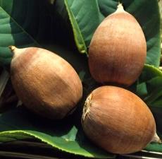 huile végétale bio de Babassu