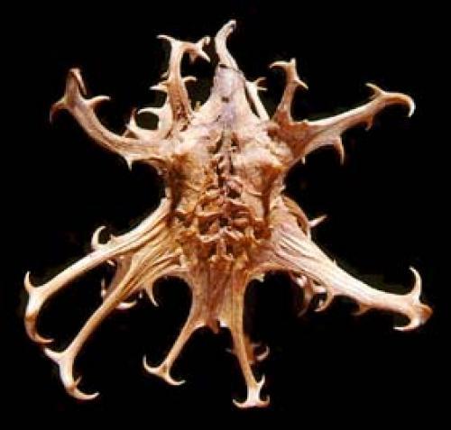 Griffe du diable ou harpagophytum bio