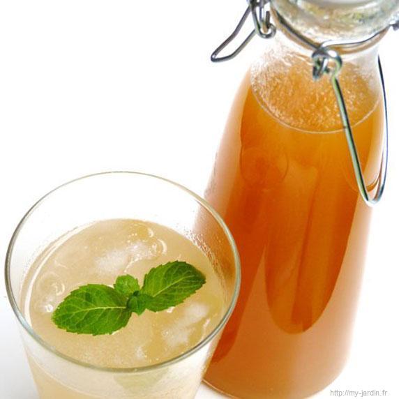 Sirop d' abricot bio allégé au xylitol - recette esprit santé