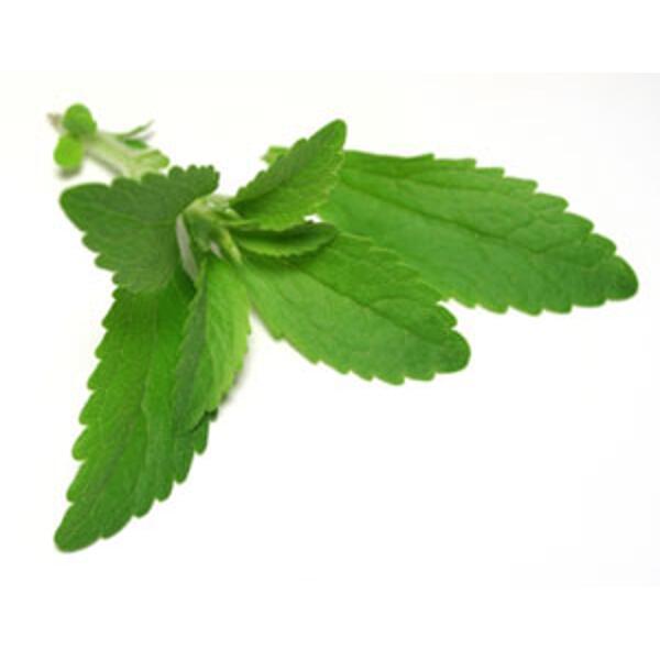feuilles de stévia bio