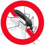 concoction d'huiles essentielles pour faire un anti-moustique naturel